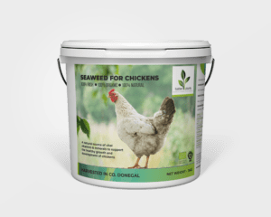 Seaweed for chickens