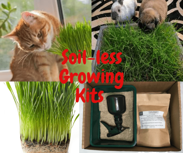 Little Pets grass kits
